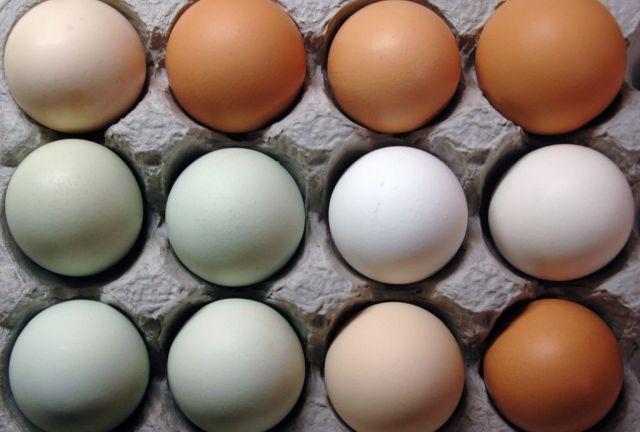 El éxito del almacenamiento de huevos en LATAM